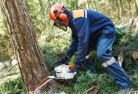 Abbotsford VIC Tree felling services 21