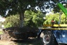 Abbotsford VIC Tree felling services 4